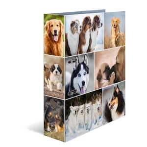 Bilde av HERMA ringperm i kartong, Hunder (10 pakk)